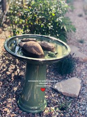 ESSCHERT DESIGN Koupel pro ptáčky na noze, zelená